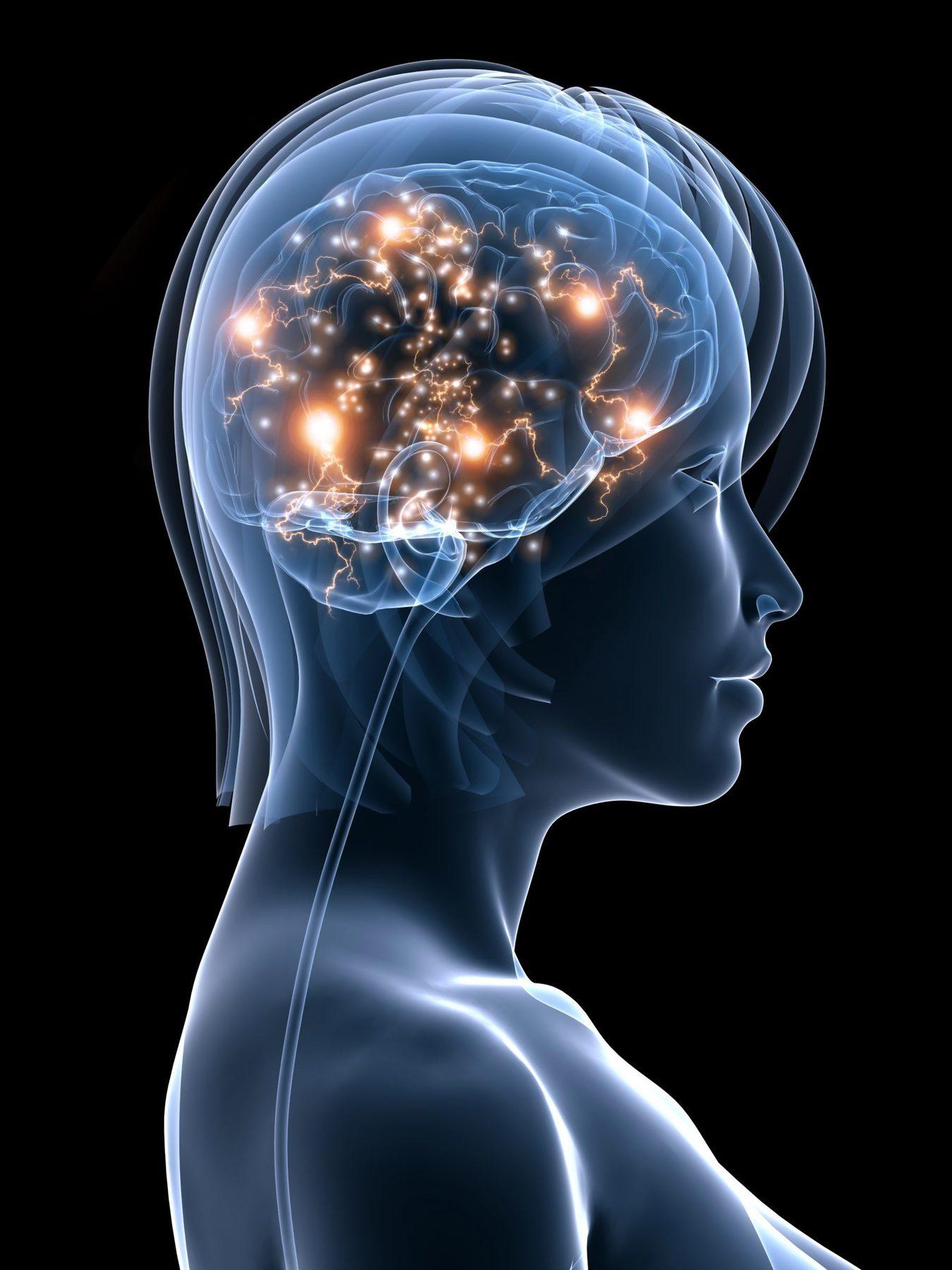 image of brain showing modern psychology process